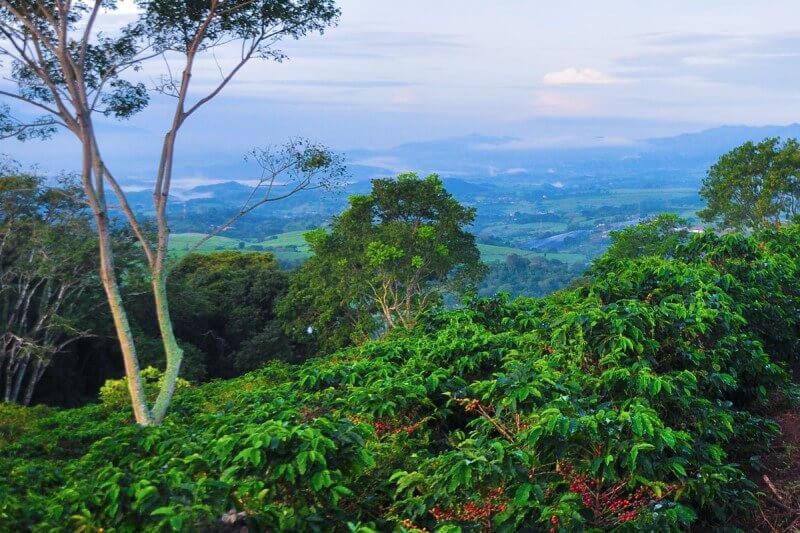 Кофе в Коста-Рике