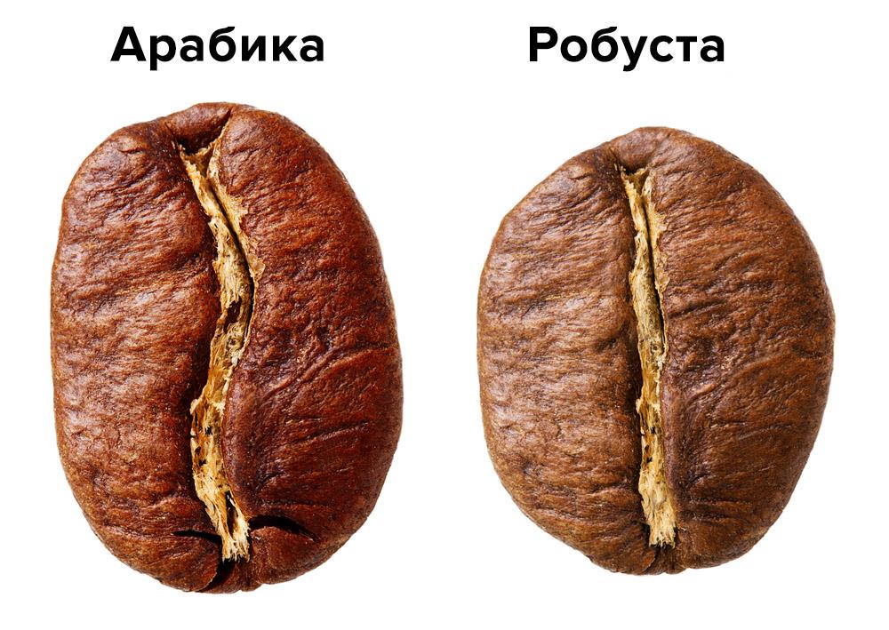 Форма зерна у арабики и робусты
