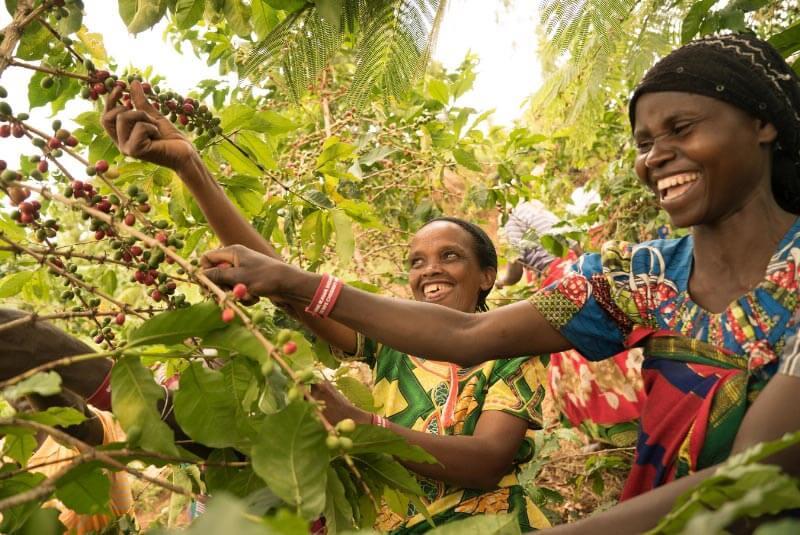 Кофе в Руанде